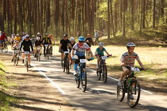 O ciclista compete na raça da elite MTB na floresta Foto de Stock Royalty Free