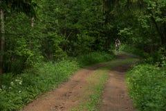 O ciclista em uma estrada de floresta Fotos de Stock Royalty Free