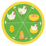 O ciclo de vida da ilustração do vetor da galinha Foto de Stock Royalty Free