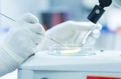 O cientista analisa a doença de planta imagem de stock royalty free