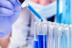 O cientista com pipeta e tubos de ensaio e a gota líquida azul da água caem Imagem de Stock Royalty Free