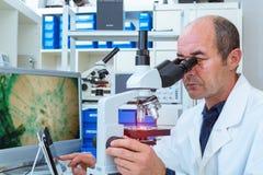 O cientista examina amostras da biópsia Foto de Stock