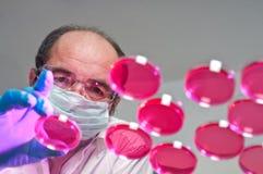 O cientista lanç pratos de cultura da pilha Imagens de Stock