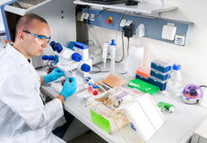 O cientista novo trabalha no laboratório Foto de Stock