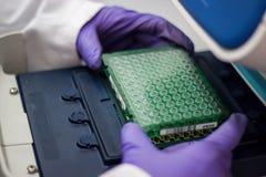 O cientista ou o pesquisador ou o aluno de doutorado tomam amostras do ADN do fla imagens de stock