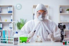 O cientista que faz a experiência animal no laboratório com coelho fotografia de stock royalty free