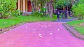 O cimento bonito da cor vermelha da pedra do bloco do tijolo da passagem com a ponte de madeira no parque do frangipani de queda  Fotografia de Stock