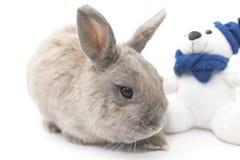 O cinza bonito do coelho senta-se perto do brinquedo macio isolado no fundo branco fotos de stock royalty free