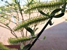 O close-up da árvore nova floresce em um ramo fotografia de stock royalty free