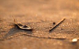 O close up da areia da praia do por do sol com folha e a madeira colam Imagem de Stock