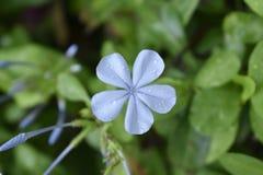 O close up da flor floresceu em meu jardim fotos de stock royalty free