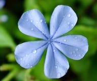 O close up da flor floresceu em meu jardim imagens de stock