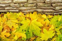O close-up das folhas de outono coloridas caídas do bordo contra o fundo das pedras, outono vem Muitos folha caída Imagens de Stock Royalty Free