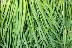 O close up das penas em cebolas frescas, orgânicas, verdes produziu a sagacidade fotos de stock royalty free