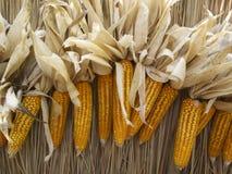 O close up de amarelo morre milho Imagem de Stock Royalty Free