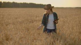 O close-up de um fazendeiro da mulher que anda com uma tabuleta em um campo com centeio toca nos spikelets e pressiona seu dedo n vídeos de arquivo