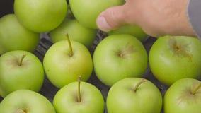 O close up detalha a caixa com a maçã verde no jardim colheita no pomar na temporada de verão mãos do fruto-cultivador que vestem filme