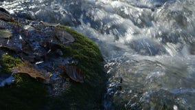 O close-up disparou de córregos da água em uma angra da montanha com as folhas de outono amarelas e marrons ao redor video estoque