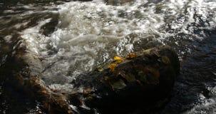 O close-up disparou de córregos da água em uma angra da montanha com as folhas de outono amarelas e marrons ao redor vídeos de arquivo
