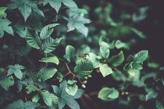 O close up disparou de uma libélula nas folhas verdes bonitas em uma floresta fotografia de stock