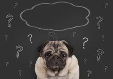 O close up do cão de cachorrinho do pug que senta-se na frente do sinal do quadro-negro com pontos de interrogação e o pensamento Fotos de Stock