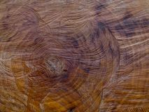 O close up do coto de árvore com viu marcas foto de stock