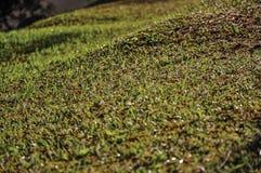 O close-up do gramado coberto pela geada da manhã, perto de Monte Alegre faz Sul Foto de Stock Royalty Free