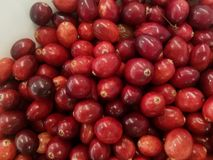 O close up do prato branco do cranberriesbin vermelho fresco, obtém seus antioxidantes fotos de stock royalty free