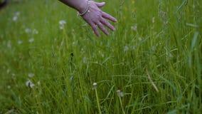 O close-up fêmea da mão toca na grama no vai A câmera está olhando a mão Tiro agrad?vel Na mão da menina um bracelete e video estoque