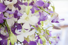 O close up floresce o ramalhete Foto de Stock