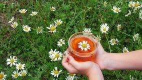 O close-up, na perspectiva da camomila e da grama verde, as mãos do ` s das crianças guarda um copo de vidro com chá de camomila  filme