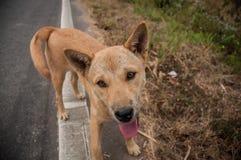O cão Fotografia de Stock
