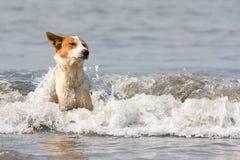 O cão banha-se na água Foto de Stock Royalty Free