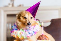 O cão do feliz aniversario olha para candle Fotografia de Stock