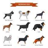 O cão produz o vetor ajustado no fundo branco Ilustração no projeto liso do estilo Ícones e emblemas Fotos de Stock Royalty Free