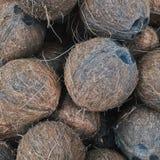O coco é um deleite tropical fotografia de stock royalty free