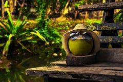 O coco com chapéu de palha e os óculos de sol brilhantes estão no banco no dia ensolarado Imagem de Stock