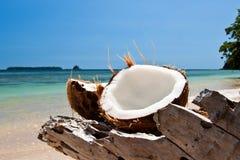 O coco desbastado no mar encontra-se na árvore Imagens de Stock