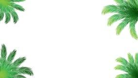 O coco sae com o vazio para o vídeo do fundo da decoração Vídeo do gráfico do verão ilustração do vetor