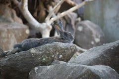 O coelho Fotos de Stock