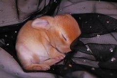 O coelho bonito do bebê do coelho poda o jogo Coelhos recém-nascidos foto de stock