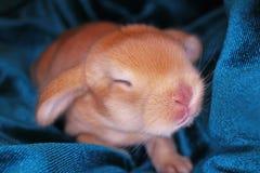 O coelho bonito do bebê do coelho poda o jogo Coelhos recém-nascidos imagens de stock