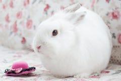 O coelho branco bonito está sentando-se em um descanso macio Imagem de Stock