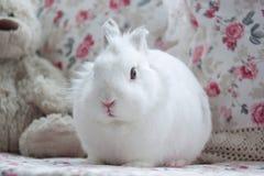O coelho branco bonito senta-se em um coxim macio Imagem de Stock Royalty Free
