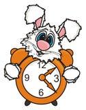 O coelho branco espreita para fora atrás de um despertador Fotografia de Stock Royalty Free