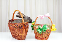 O coelho cinzento na cesta alcança para a cesta da Páscoa Fotografia de Stock Royalty Free