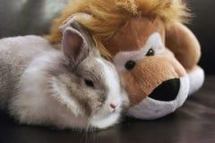 O coelho do brinquedo e o leão Fotografia de Stock Royalty Free