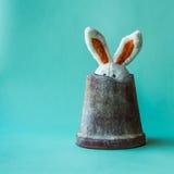 O coelho engraçado, bonito da peluche esconde em um potenciômetro de flor foto de stock