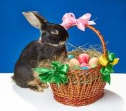 O coelho grande tenta escalar na cesta Fotos de Stock