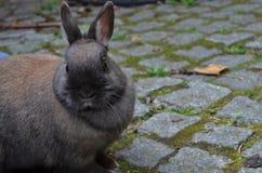 O coelho marrom bonito olha curioso imagens de stock